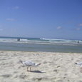 the kirra beach